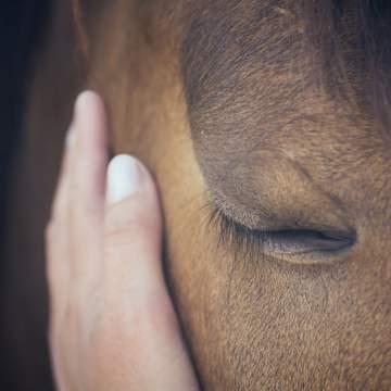 Entraînement de chevaux sportif CSO